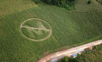 monsanto, organic farming